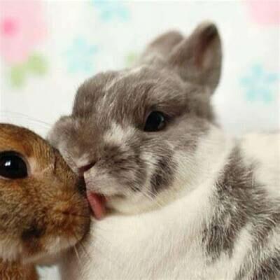 Single Filled Pen - Bunny Kisses