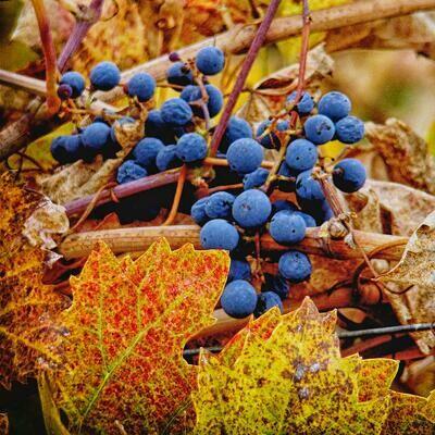 Single Filled Pen - Autumn Harvest