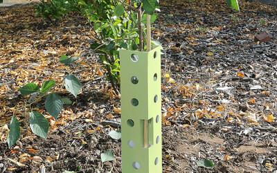 Plasticvrije jonge aanplant/boombeschermers.