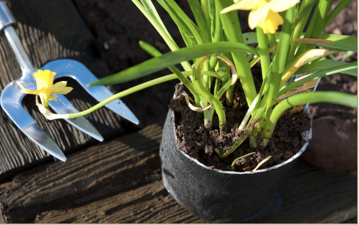 Biologisch afbreekbare plantpotjes, verpakt per 100 stuks.