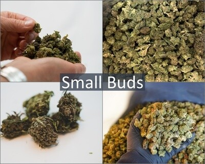 Hemp Flower Samples   Small Buds   Wholesale