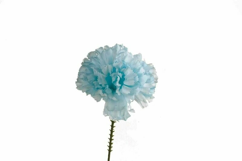 S3000LTBL - Carnation Pick $16.95 ( Box 100)