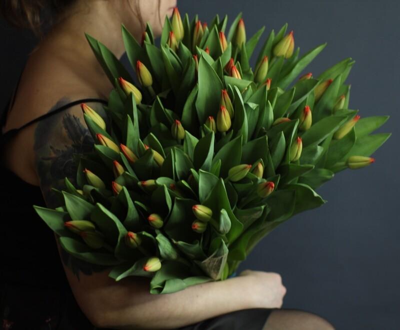 Моно огненно-красных тюльпанов