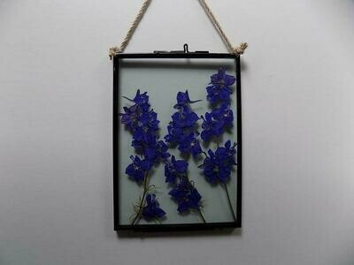 Larkspur 5 x 7 inches
