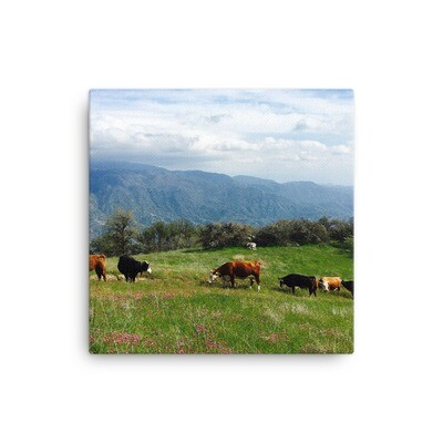 Cows in lush green pasture