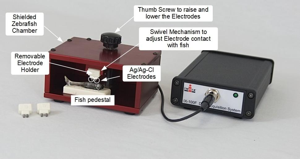 Zebrafish ECG system