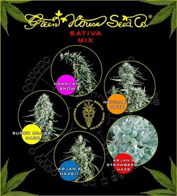 Sativa Mix Feminised Seeds