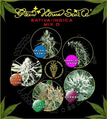Sativa Indica Mix D Feminised Seeds