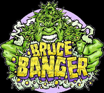 Bruce Banger Feminised Seeds