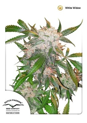 White Widow Regular Seeds - 10