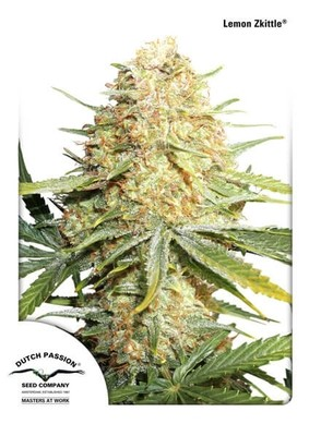 Lemon Kix Auto (formerly Lemon Zkittle) Feminised Seeds