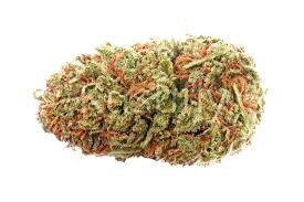 Dank Seeds - California Orange Feminized