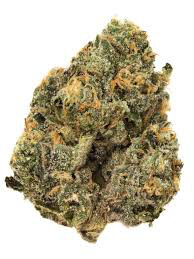 Dank Seeds - Sunset Sherbet Feminized