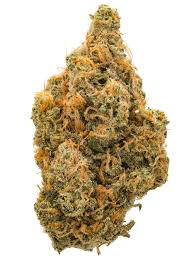 Dank Seeds - Northern Lights Feminized