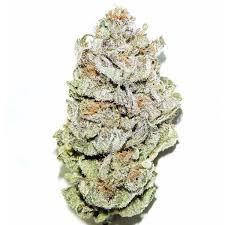 Dank Seeds - Super Silver Haze OG Feminized