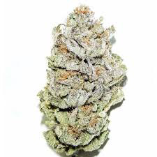 Dank Seeds - Super Silver Haze OG Feminized