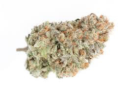 Dank Seeds - Blueberry Feminized