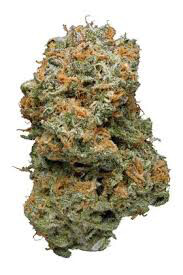 Dank Seeds - Blue Dream Feminized