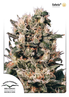 Euforia Feminised Seeds
