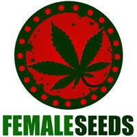 Dream Berry Feminised Seeds