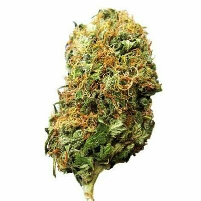 Dank Seeds - Big Bud Feminized
