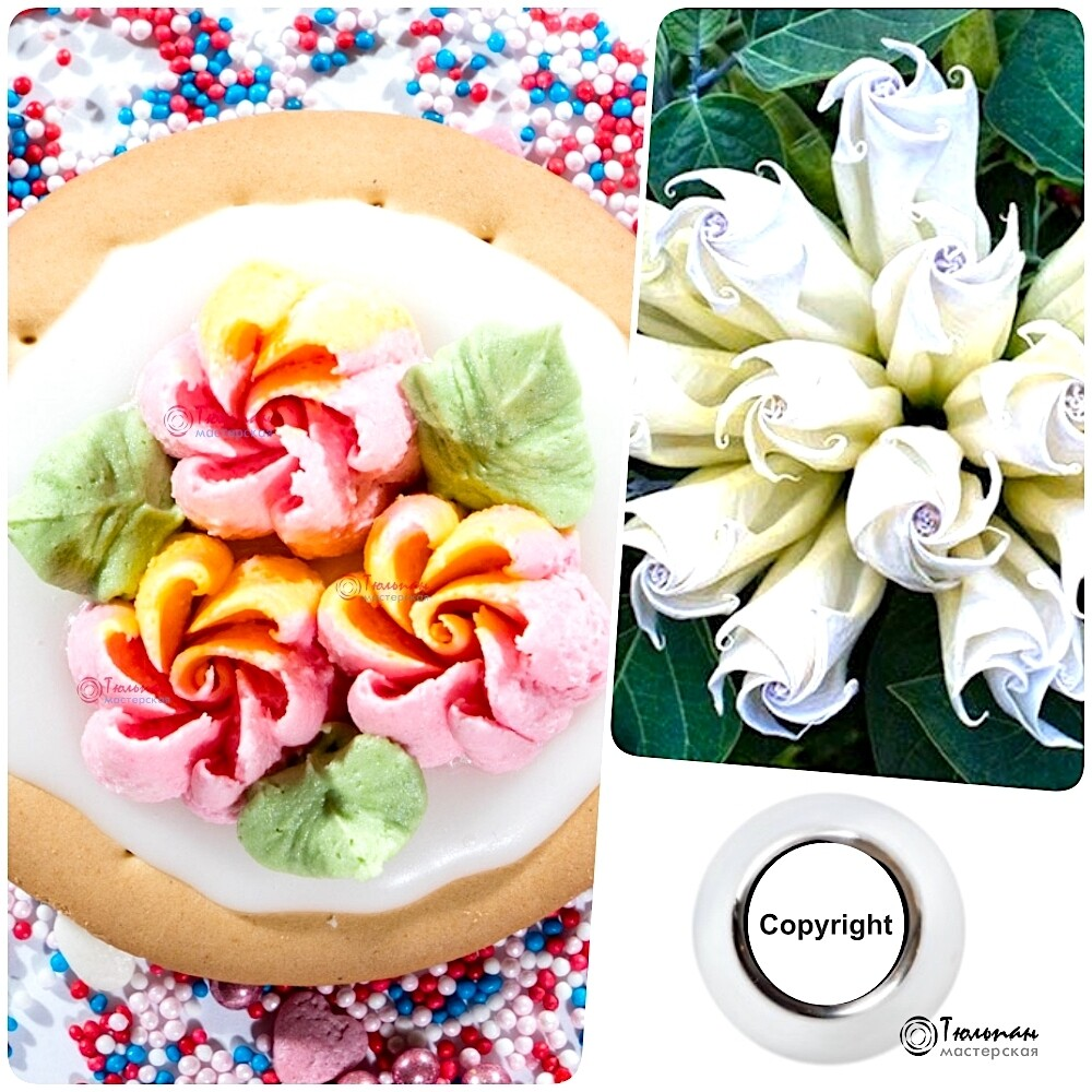 Насадка Цветок №104 Жасмин | L размер (Russian Flower Nozzle #104 - Jasmin | L size | By Tulip Workshop)