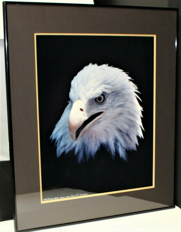 Phil Sonier Bald Eagle American Spirit Nature Portrait Moments #144/250, Signed