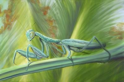 """Mantis"" 6'X4'"