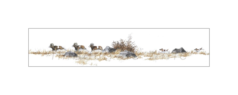 Course Poursuite - Mouflons et Foxs