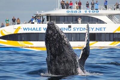 【シドニー】クジラウォッチング(3時間ディスカバリークルーズ)