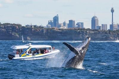 【シドニー】クジラウォッチング(2時間アドベンチャークルーズ)