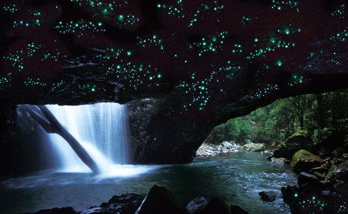世界自然遺産ナチュラルブリッジ 洞窟の土ボタルツアー
