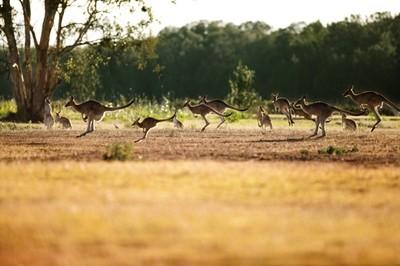 土ボタルと 野生動物探検エコサファリ