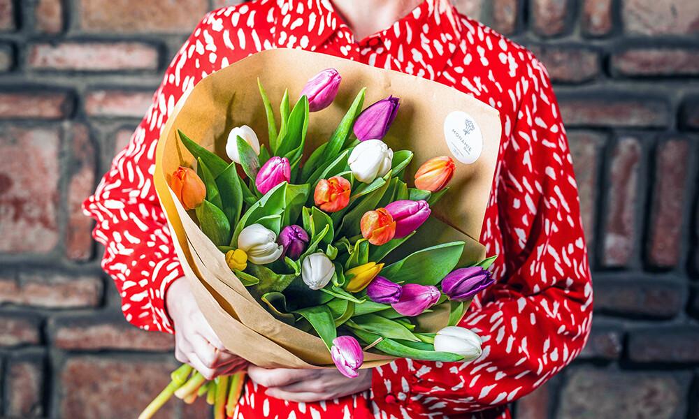 ფერადი ტიტები | Colorful Tulips