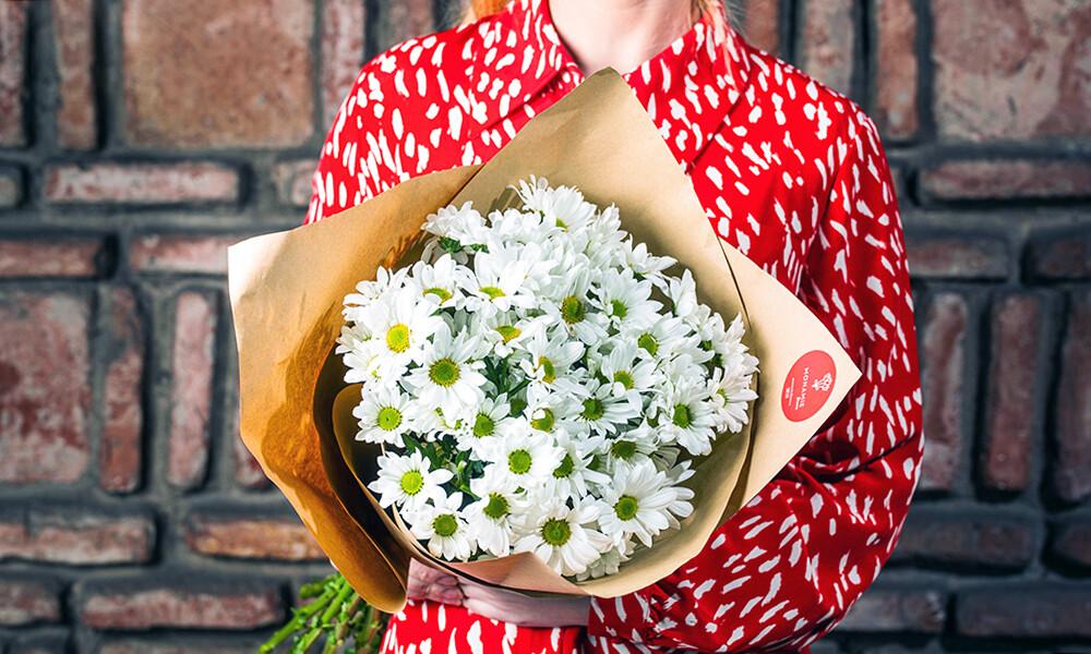 ქრიზანთემა   Chrysanthemum