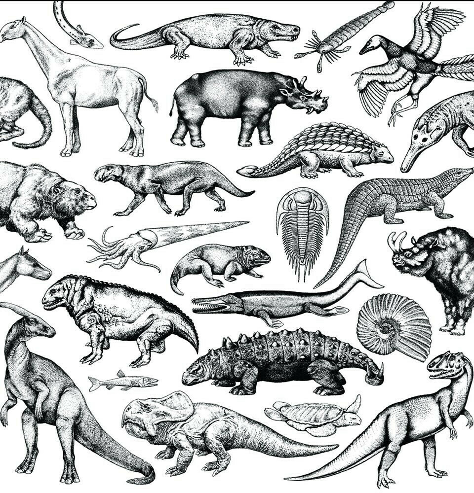 Scratch Fossils