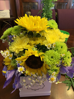 Judy's Collection 4 - Sunflower Summer Love