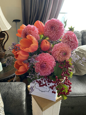 Judy's Collection 3 Dahlias (Season June /July)