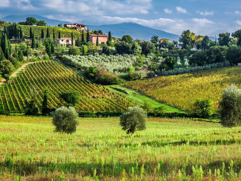 Wines of Tuscany Tasting - 4/16/21