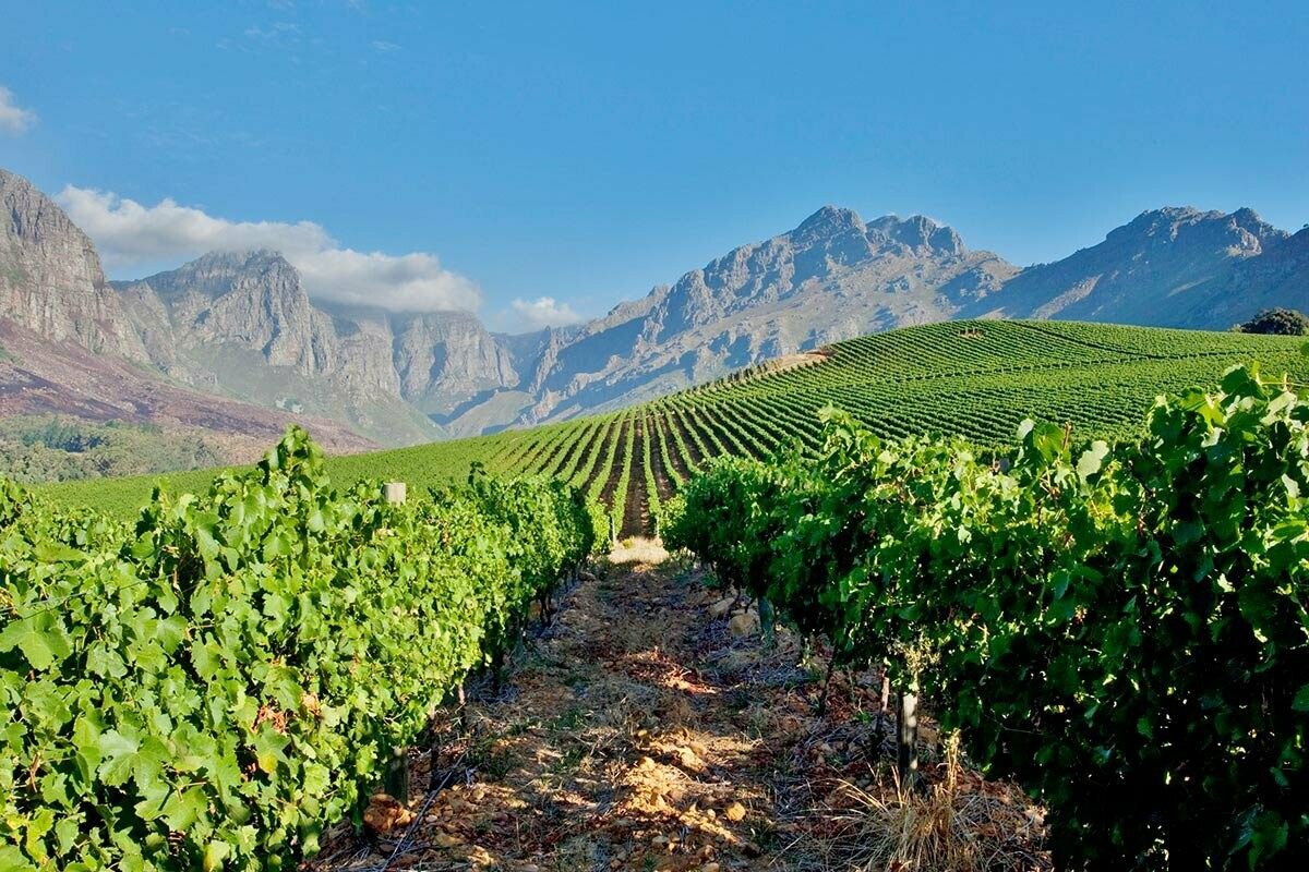 South Africa Wine Tasting - 7/16/21
