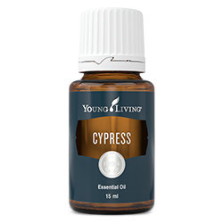 Cypress essential oil - 15ml  [Wholesale]