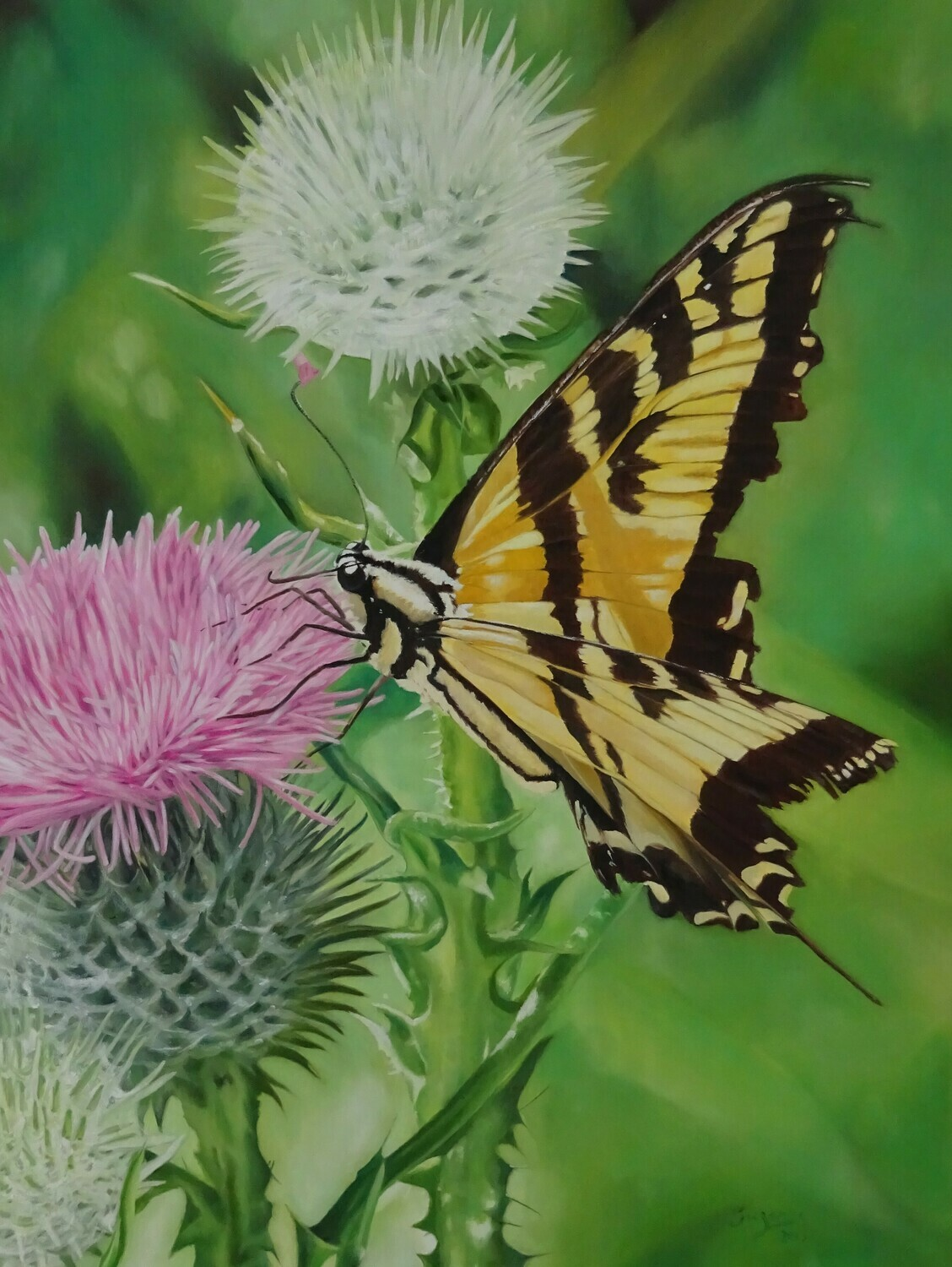 Rebirth. Tiger Swallowtail Butterfly