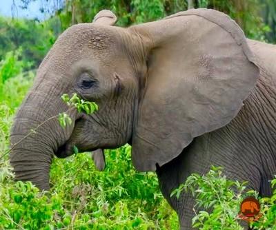 Elephant Smile- Original Photo 5 x 7 Card