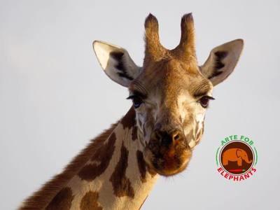 Hello Giraffe - Original Photo 5 x 7 Card