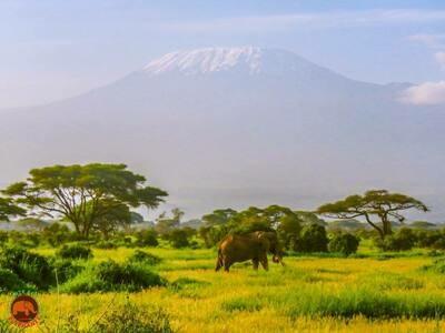 Craig & Mt. Kilimanjaro Art Print