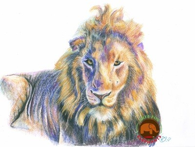 Ollokol- King of the Mara Large Fine Art Print