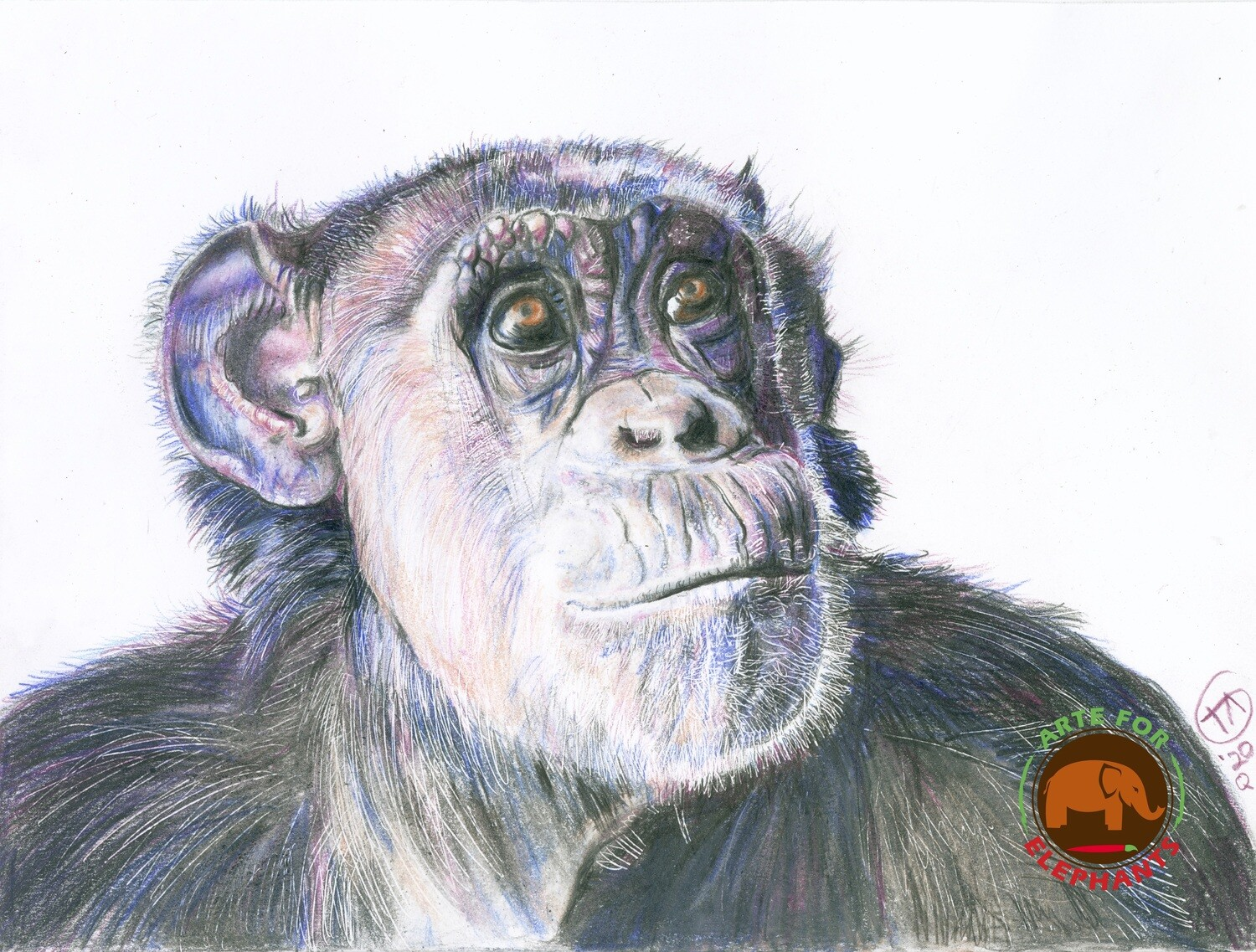 Wonderful Jody the Chimp