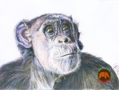 Wonderful Jody the Chimp PRINT