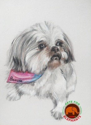 Pet Memorial Portrait- Colored Pencil on Paper
