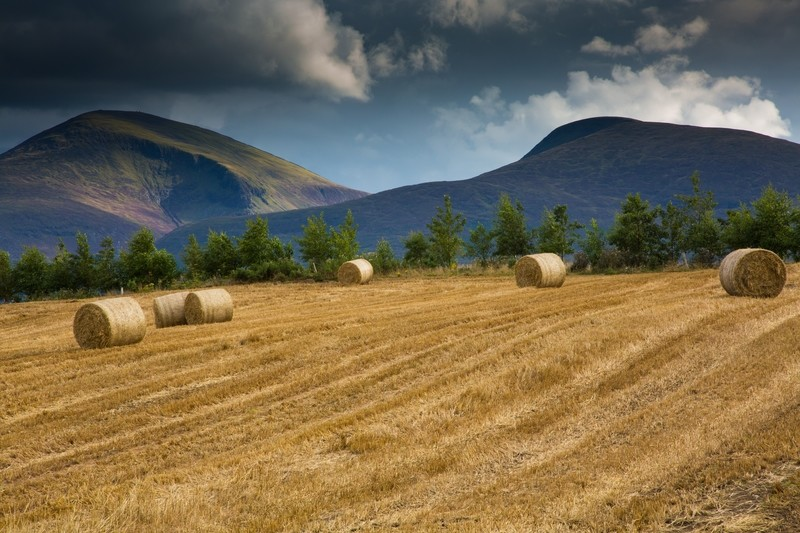 Bails of straw overlooking the Mourne Mountains